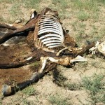 Horses Mutilated in Rush Colorado! 08/11/2010