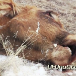 UFOnut.com – Episode 004: Aaron Cattle Mutilation