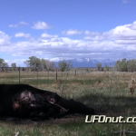 UFOnut.com – Episode 009: Sanchez Cattle Mutilation 2011