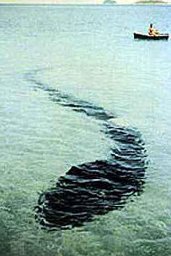Hook Island sea monster